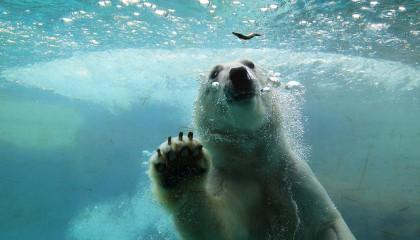 l'art de la photgraphie animalière