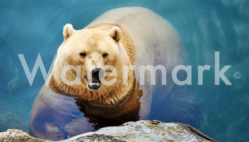 Comment protéger ses images sur Internet avec un Watermark